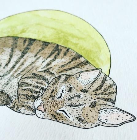 cat comission